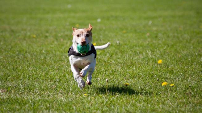 Pettorine migliori per cani