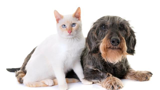 Come prendersi cura di cani e gatti che invecchiano