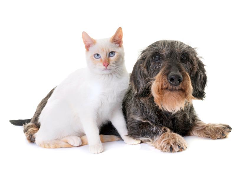 Un gatto e un cane vecchio