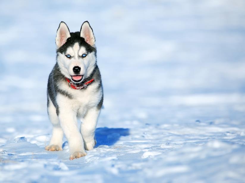 come riscaldare le migliori cucce da esterno per cani