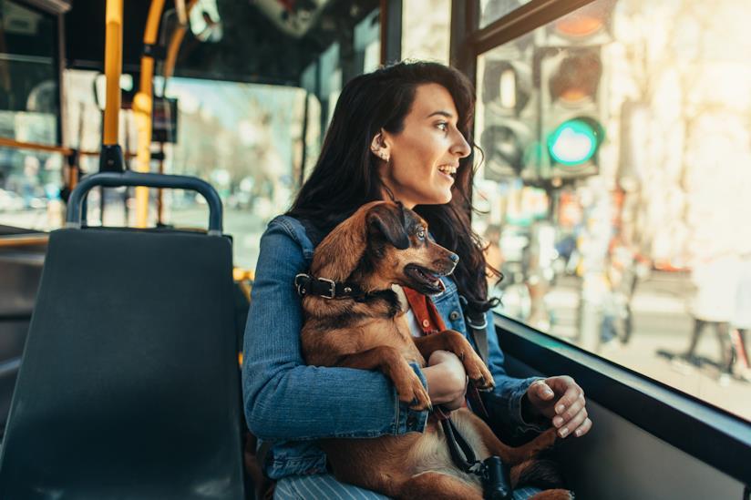 Ragazza con il cane in autobus