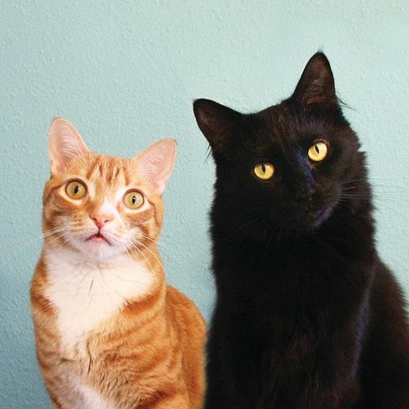Cole & Marmalade viral cat