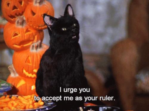 Salem vuole comandare