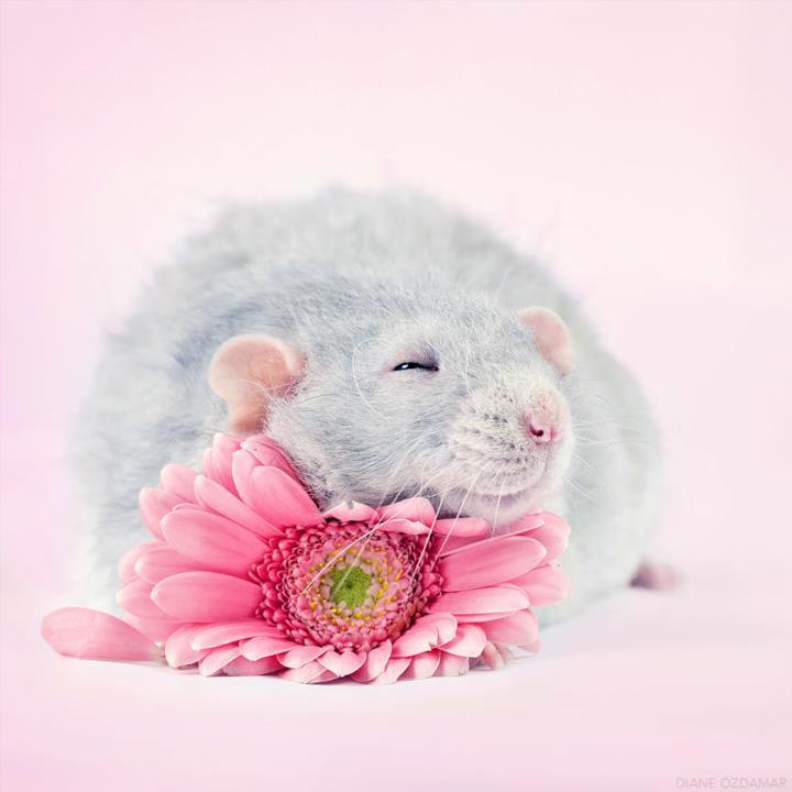 Un topolino grigio con un fiore