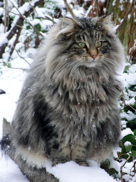 UN gatto nella neve