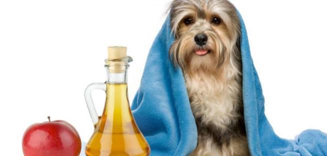 Un cane può essere lavato con acqua e aceto?