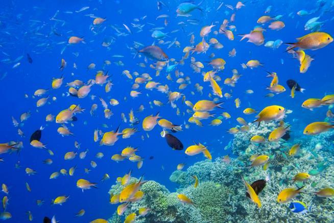 Pesci colorati nelle acque delle Maldive