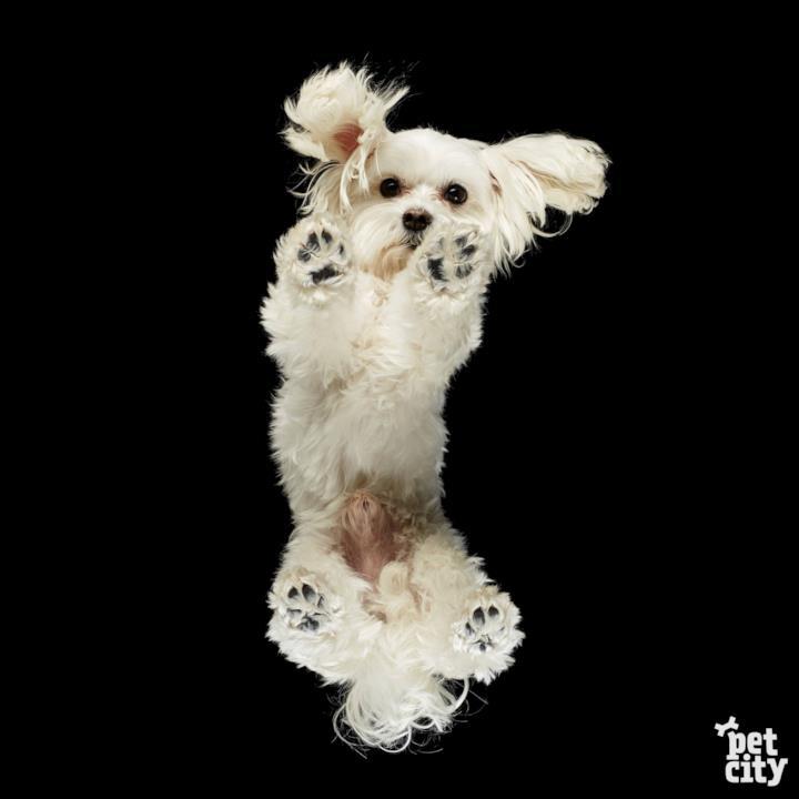 Un piccolo cane bianco fotografato dal basso