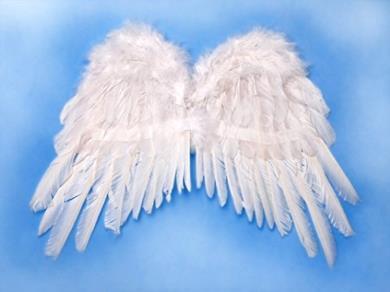 Ali d'angelo piumate bianche