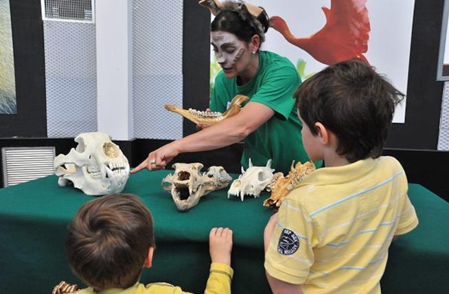 Foreste Sottosopra, evento dedicato alle famiglie e ai bambini