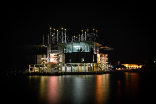 I 10 acquari più spettacolari al mondo da visitare: Ocenario Lisbona, Portogallo