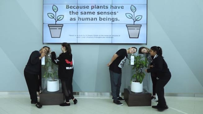 Un immagine del video che spiega l'esperimento Bully a Plant di IKEA