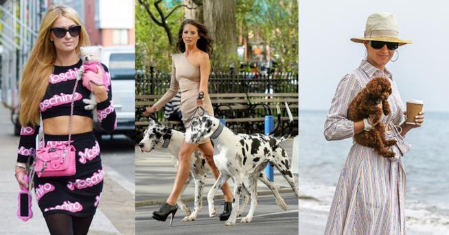 Come vestirsi per la passeggiata con il cane