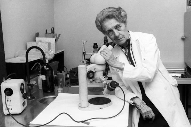 Rita Levi-Montalcini al microscopio