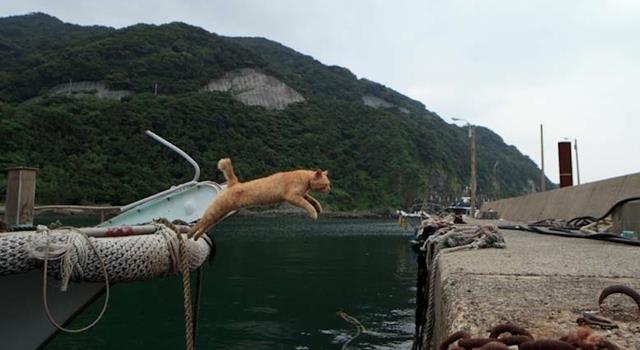 L'immagine di un gatto che salta da una barca al molo