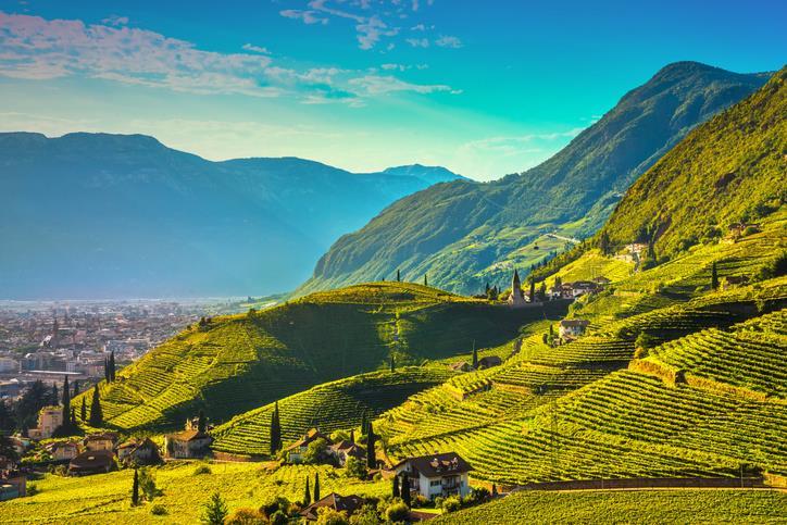 Vigneti in Trentino Alto Adige