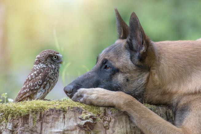 Una cane ed un gufo