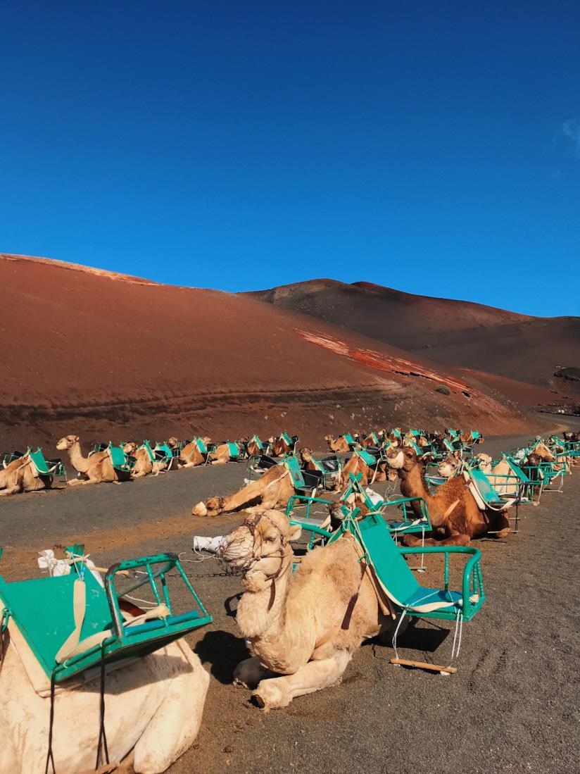 Escursione in cammello al parco Timanfaya di Lanzarote