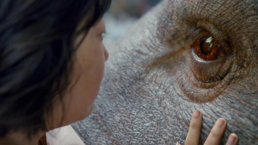 Quando il cinema è dalla parte degli animali i film imperdibili