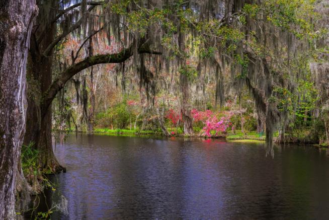 I colori della Magnolia Plantation