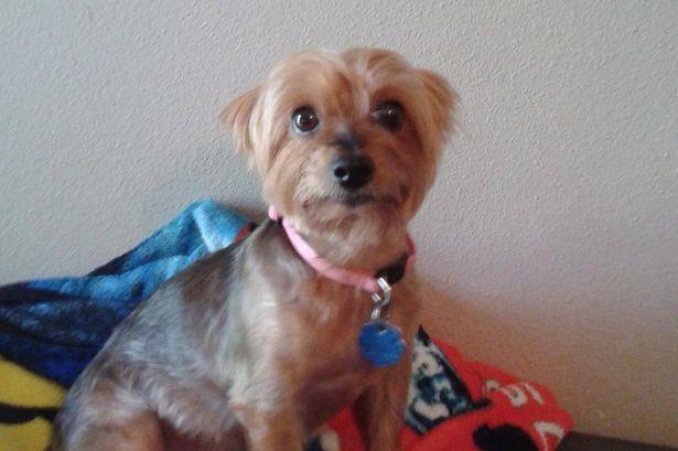 Una cagnolina col collare rosa