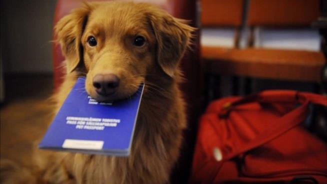 Cane con un passaporto in bocca.