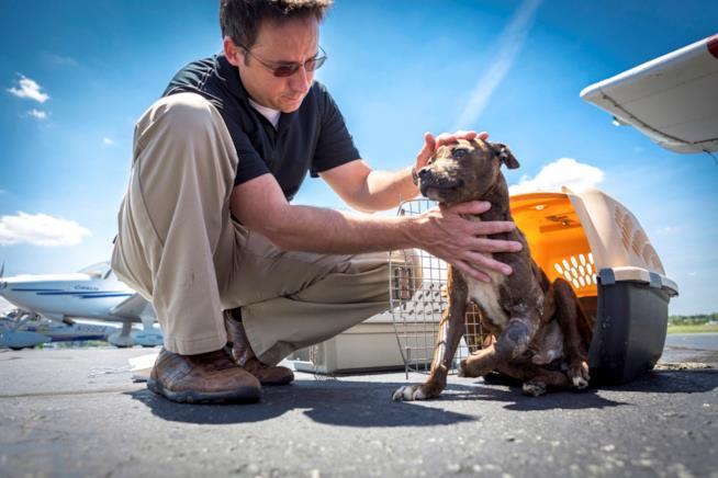Un cane salvato da Paul Steklenski