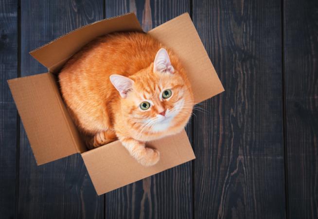 Gatto in una scatola guarda verso l'alto