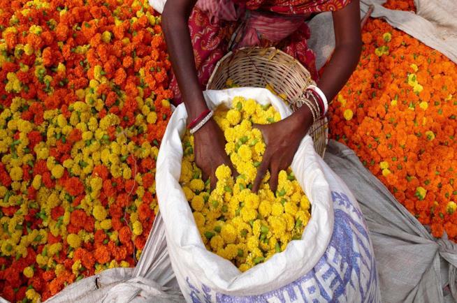 India, donna al mercato dei fiori