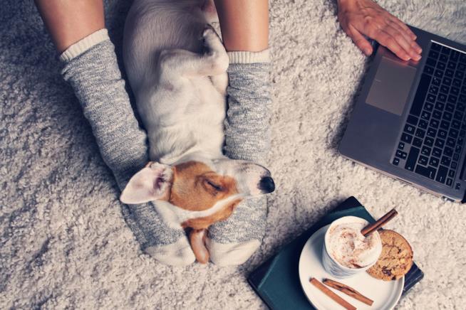 Un cagnolino dorme beato sulle gambe di una ragazza