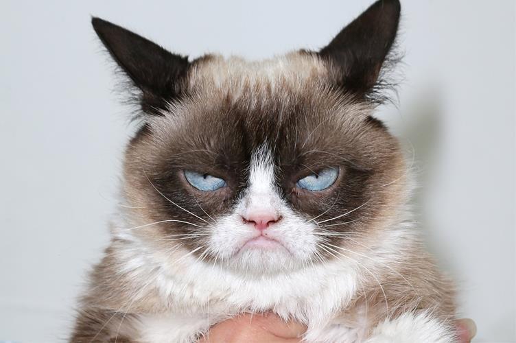 Grampy Cat imbronciato