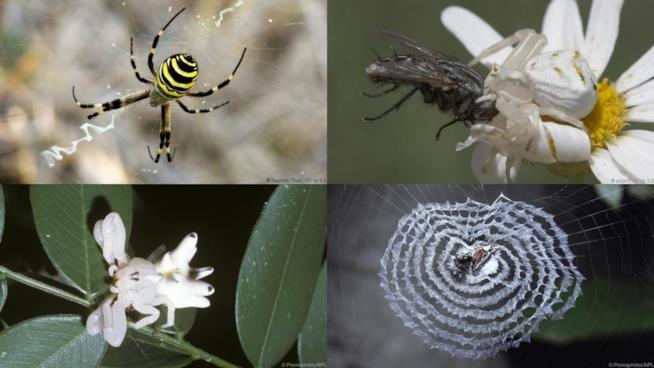 Ragni dall'aspetto e capacità incredibili