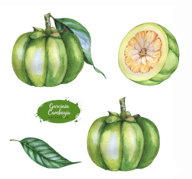 Illustrazione della garcinia cambogia