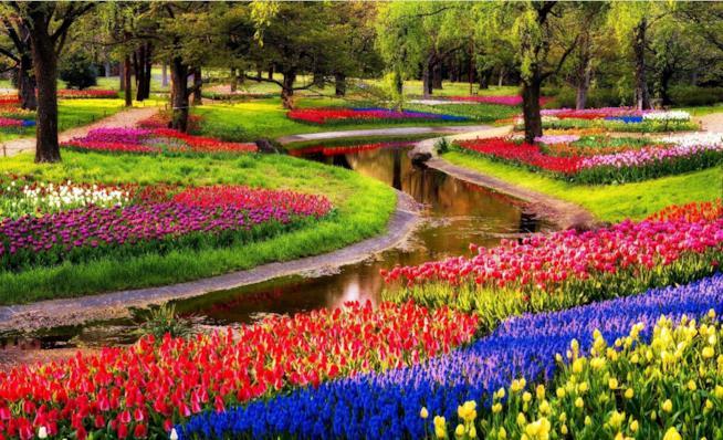 I giardini più belli d'Europa, Giardino di Keukenhof, Lisse, Paesi Bassi