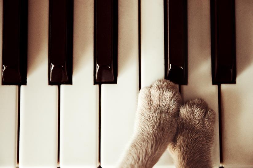 Zampette gatto su un piano