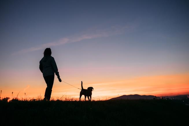 Rilassante passeggiata con cane