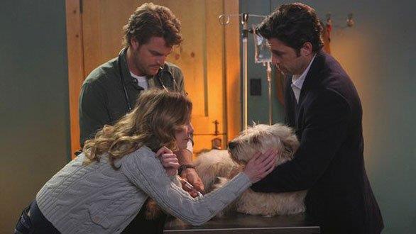 Doc dal veterinaio Finn con Meredith e Derek in una scena di Grey's Anatomy 2