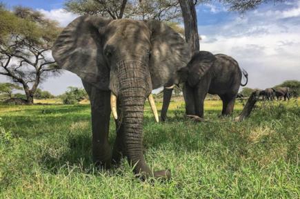 Offerte per safari in Africa