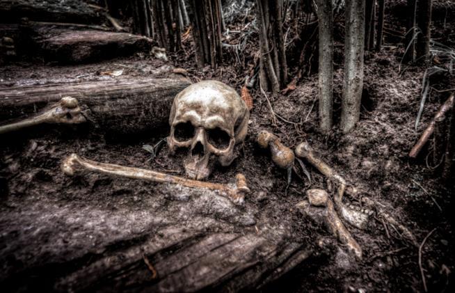 Ossa abbandonate in un bosco