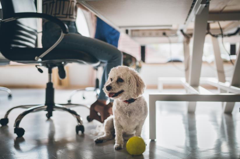 Cane in uffici