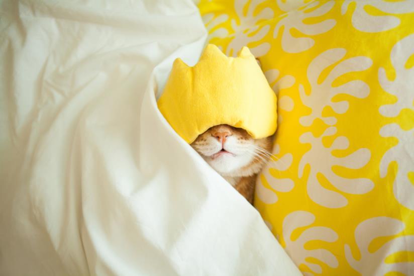 Gatto a letto che dorme con una mascherina da notte sugli occhi