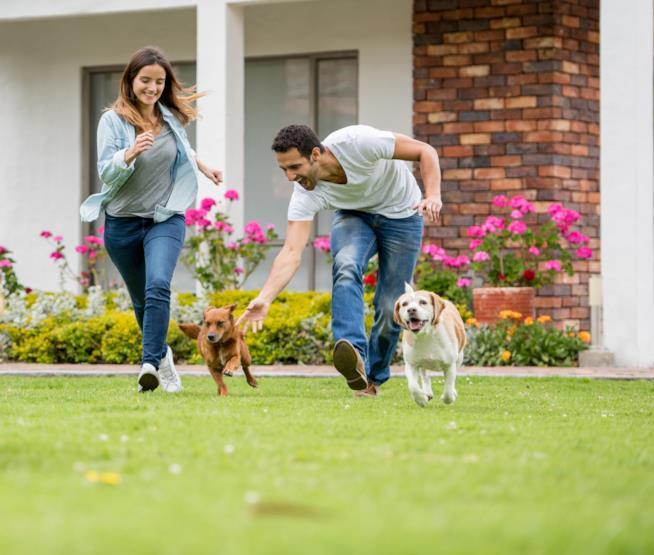 Coppia gioca con il suo cane