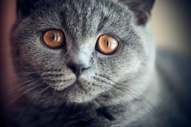 Gli occhi curiosi di un gatto