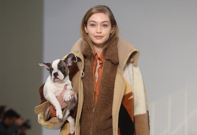 Gigi Hadid con un cagnolino sulla passerella di Tod's
