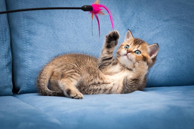 Micio gioca sul divano