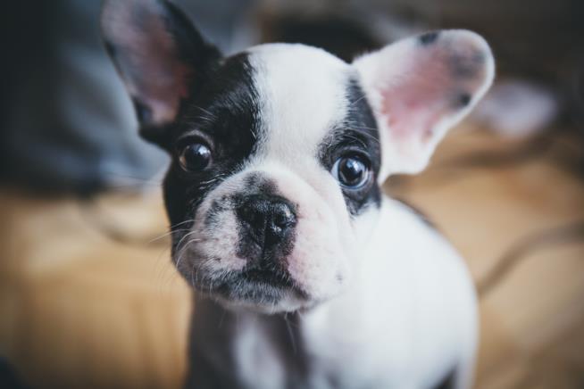 i migliori antiparassitari spot on per cani anche cuccioli