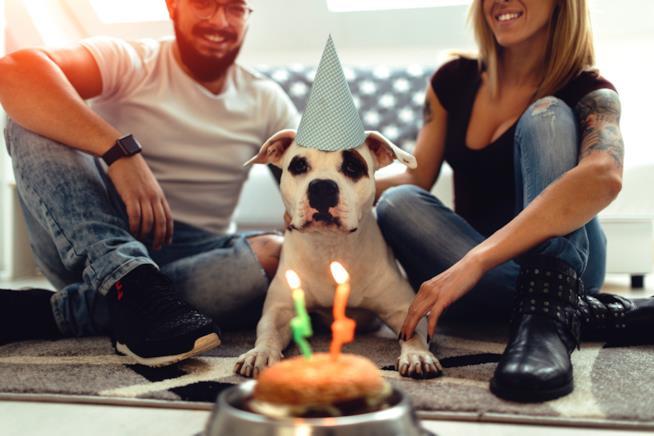 Cane con i padroni davanti alla torta del suo compleanno