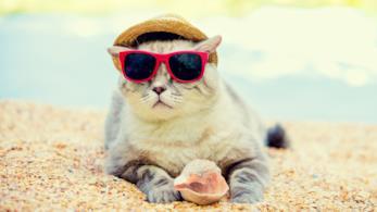 12 viaggi per chi ama i gatti