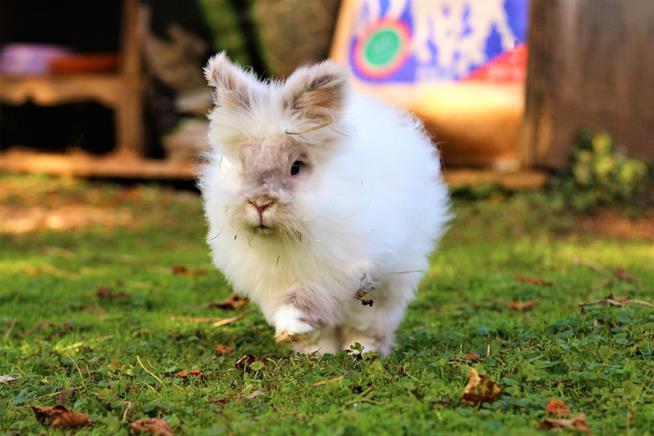 un coniglio bianco corre in un prato