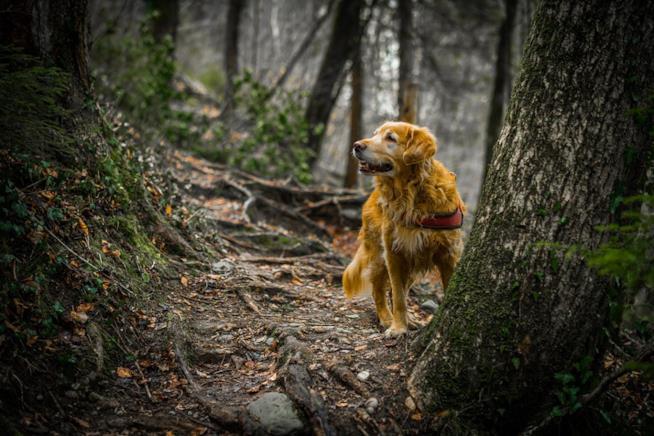 Un cane in un bosco
